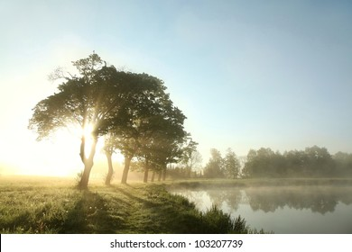 Misty spring morning on the edge of the lake.