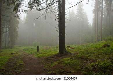Misty summer morning in Black Forest Germany