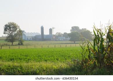 Misty summer morning on Lancaster County Farm