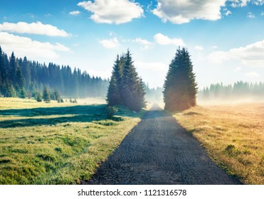 Misty summer scene of Durmitor National Park. Sunny morning view of Montenegro countryside, Zabljak town location. Beautiful world of Mediterranean countries. Traveling concept background.