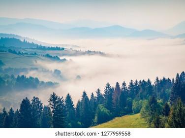 Misty summer view of Carpathian mountains. Gorgeous morning scene of Borzhava mountain ridge, Transcarpathian, Ukraine, Europe. Beauty of nature concept background.