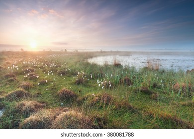 misty sunrise on swamp in spring, North Brabant, Netherlands