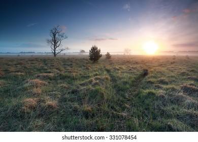 misty sunrise over marsh in spring, Kampina, Netherlands