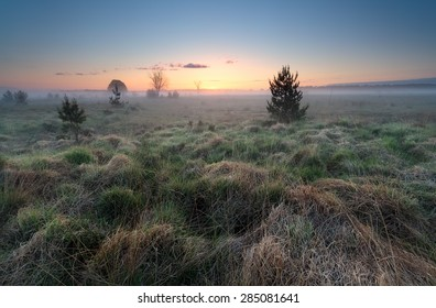 misty sunrise over wild meadow, North Brabant, Netherlands