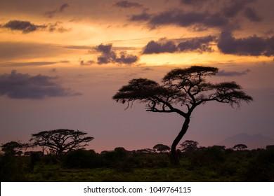Misty sunset light on african savannah