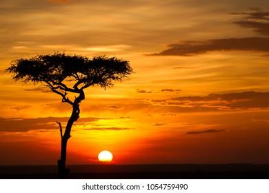 Misty sunset on african savannah