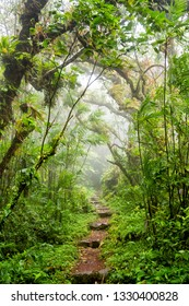 Misty Trail Overgrown by Rainforest Tree Branches in Volcan Mombacho National Park, Nicaragua