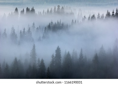 Misty Transylvanian forests from the Western Carpathians, Romania