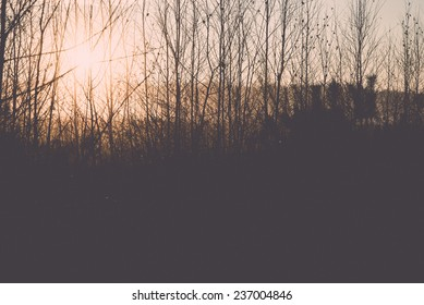 misty tree branches in bright sunlight in countryside - retro, vintage style look