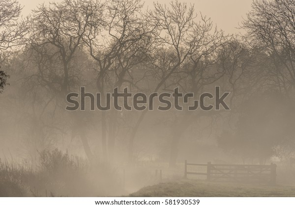 Misty tree and gate scene Wiltshire England