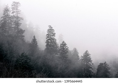 Misty Tree Line in Great Smoky Mountains National Park on the Border of Tennessee and North Carolina