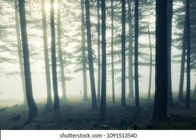 Misty view in countryside woodland