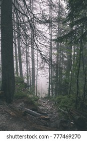 Misty wet morning in the woods. forest with tree trunks and tourist trails in the rain - vintage retro look