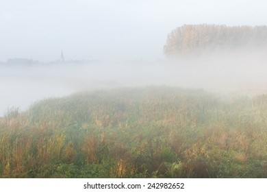 Misty wetlands