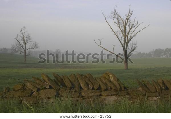 A misty winter field in kentucky.