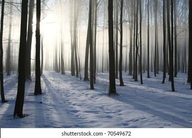 Misty winter woods at dawn. Photo taken in December.