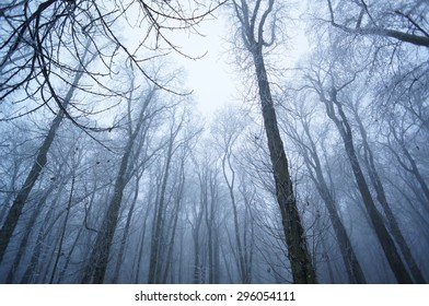 Misty woods in winter: