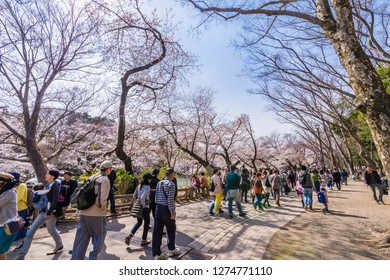 """MITAKA, TOKYO / JAPAN - APRIL 6 2017 : Scenery of """"Inokashira Park"""" where cherry blossoms bloom. A lot of people visit to see the cherry blossoms."""