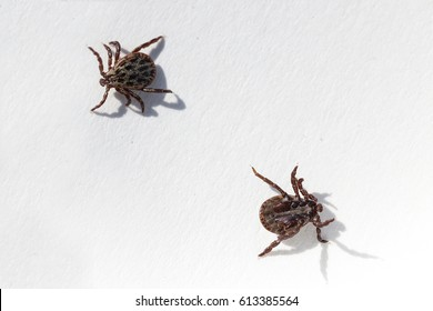 Mite in spring on a white background