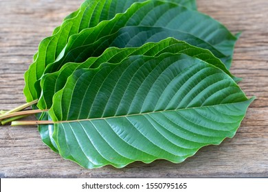 Mitragyna speciosa Korth (Kratom) is drug from plant. It is a medicinal plant and is addictive.