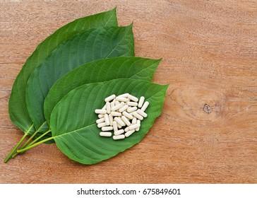 Mitragyna speciosa (kratom) plant in thailand on wooden background.