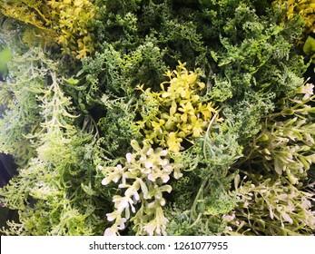 Mix of artificial plants