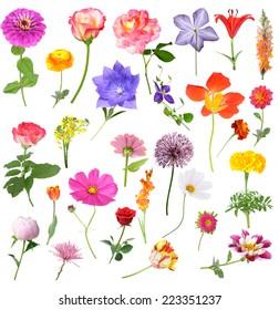 mix beautiful flowers isolated on white background