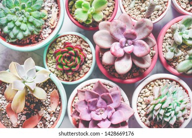 Mix of beautiful succulent plants with pastel colors