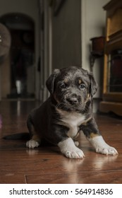 Mix breed puppy 4 weeks old