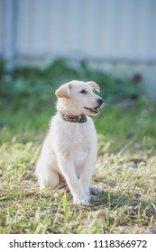 Mix breed puppy sits, wearing collar