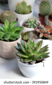 Mix of cactuses in the white light room