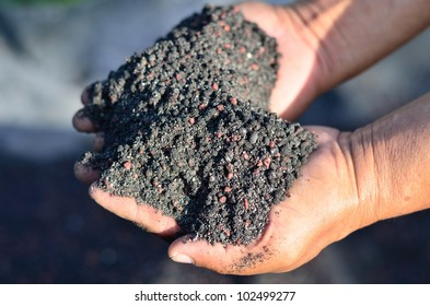 The mix of chemical fertilizer and manure on farmer hands.