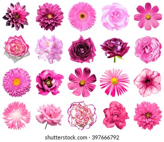 Mix collage of natural and surreal pink flowers 20 in 1: peony, dahlia, primula, aster, daisy, rose, gerbera, clove, chrysanthemum, cornflower, flax, pelargonium isolated on white