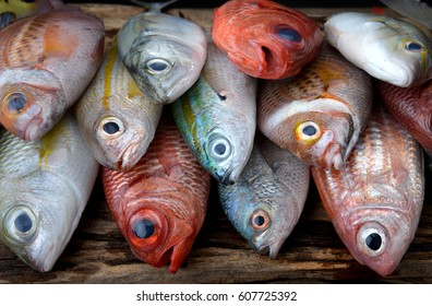 mix colorful fresh fishes from fishery market on wooden plate .