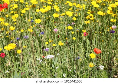 A mix of colourful wildflowers