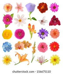 mix flowers  isolated on white background