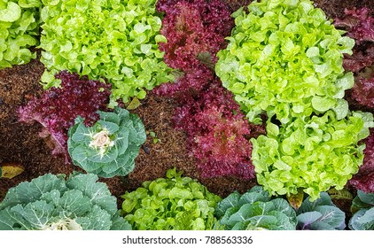 Mix fresh organic vegetable in the garden