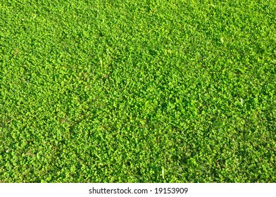 mix of grass and clover