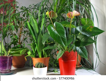 Mix of houseplants in the light white room