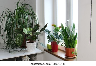 Mix of houseplants in the white light room