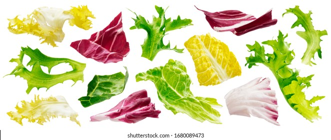 Mix of leaves with rucola, lettuce, radicchio, romano and green frize isolated on white background, pattern of salad ingredients collection