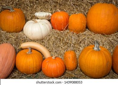 a mix of ornamental pumpkin