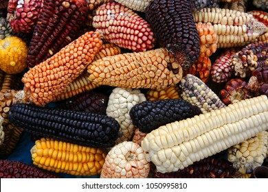 Mix of peruvian native variety of heirloom corns from local market in Cusco, Peru that use for making Chicha morada which is the staple food for Inca and Maya people around Central and South America