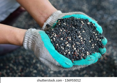The mix of plant chemical fertilizer and manure on farmer hands.