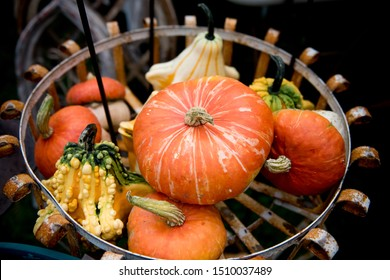 a mix of small decorative pumpkins that are also great for eating. The semi-bush plants produce great yields. This mixture contains Bumpkin, and Hooligan varieties.