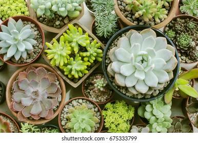 Mix of succulent flowering house plants pots garden top view