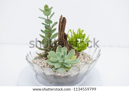 Mix Succulents Table Centerpiece Arrangement On A Beautiful Design Glass  Bowl. Isolated On White Background