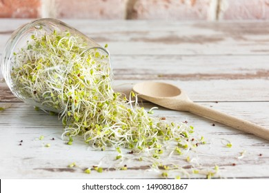 Mix of various sprouts on wooden background. Sprouted seeds. Healthy eating concept.