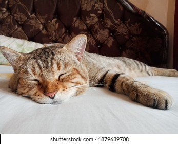 A mix-domestix cat sleeping right after having a warm bath. - Shutterstock ID 1879639708