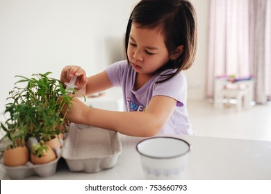 Mixed Asian girl watering plants in eggshells,  montessori homeschool education , reuse concept